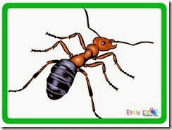 bug4 copy