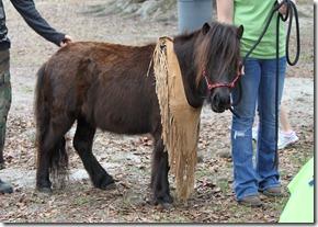 miniture pony