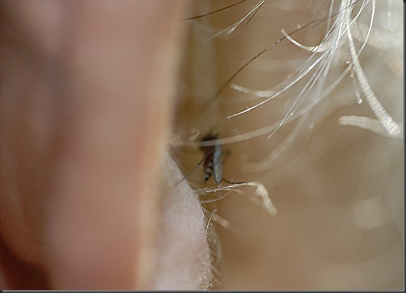 kukka hyttynen 015