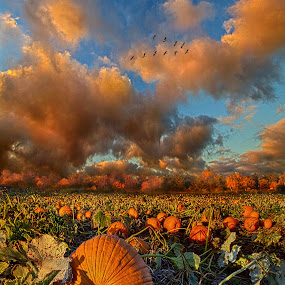 The Survivors by Phil Koch - Landscapes Prairies, Meadows & Fields ( vertical, photograph, bench, blue   sky, fine art, yellow, travel, leaves, love, sky, nature, tree, autumn, trail, picnic table, light, flower, orange, twilight, agriculture, horizon, portrait, environment, dawn, season, serene, outdoors, trees, wild   flowers, floral, inspirational, natural light, wisconsin, ray, landscape, phil koch, sun, photography, path, horizons, inspired, office, clouds, park, green, back light, scenic, morning, ferns, shadows, field, red, blue, color, sunset, peace, fall, meadow, landscapephotography, beam, earth, sunrise, landscapes, hike, mist,  )