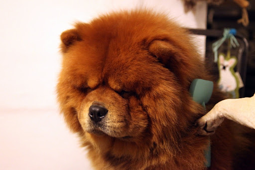 Ah, see, GK?  No tangles means no tears!  Grooming should be a good experience that brings owners closer to their pets.