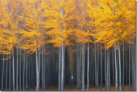 autumn-colors-fall-003