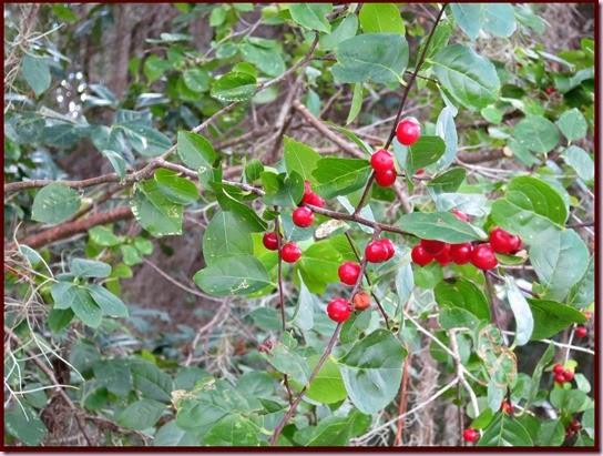 berriesIMG_8546