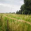 Heulebeekwarande foto zomer 2012 els deprez 002 (1).JPG