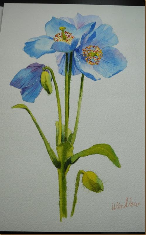 blue poppy(web)