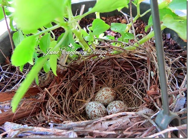 Nest_eggs