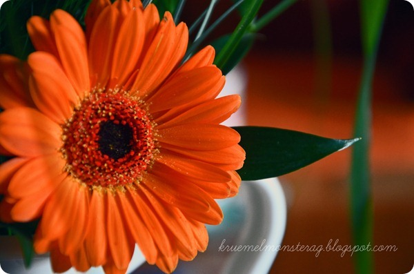 12 12 2012 photochallenge LET IT BLOOM (4)