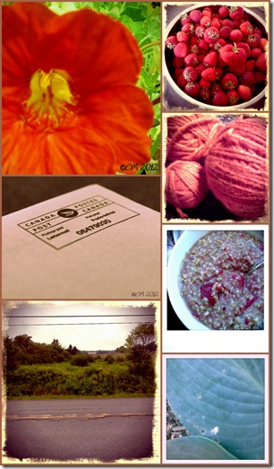 Photo a Day July Collage Week 2