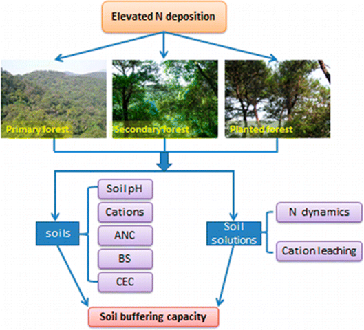 Diagram showing the chemical effect of nitrogen fallout on forest soil buffering capacity. Long-term N addition significantly accelerates soil acidification and decreases soil buffering capacity in primary forests. Graphic: Xiankai, et al., 2015