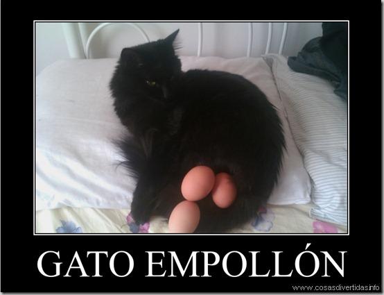 gato empollon
