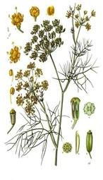 obat-herbal-adas