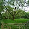 Venning weide bomen foto Griet Santy.JPG