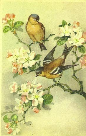 dogwoodbirds2