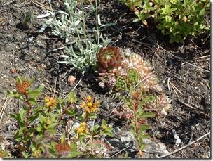 022-lichen