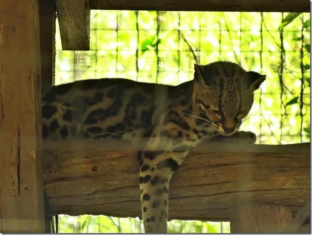 Cayenne_Zoo_DSC08091
