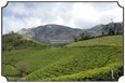 MNR_307_DSC0050_www.keralapix.com