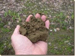loam subsoil