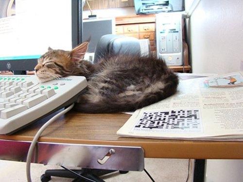 Cats Will Sleep Anywhere 14