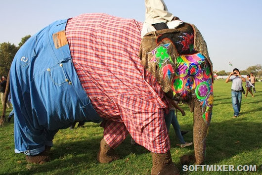 jaipur-elephant-festival-017
