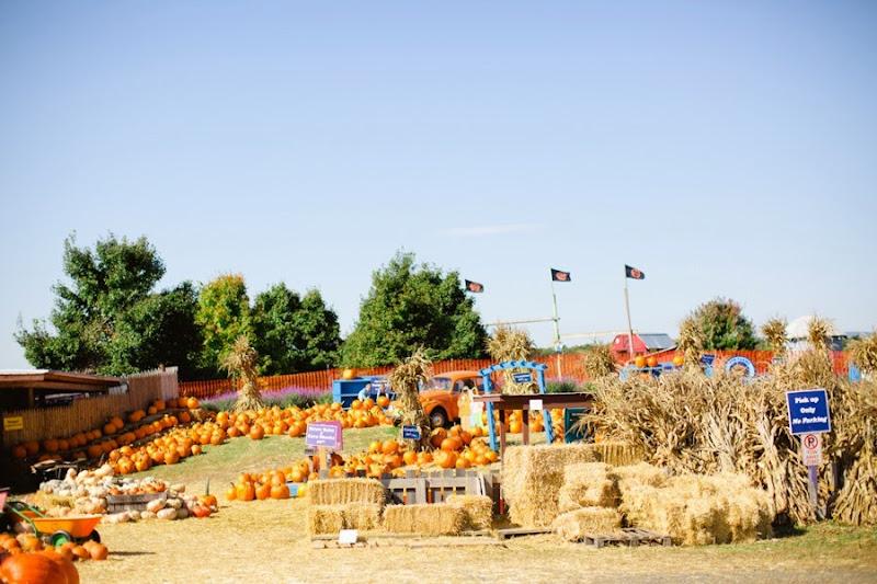 Cox's Farm Fun (1)