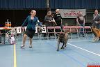 20130510-Bullmastiff-Worldcup-0664.jpg