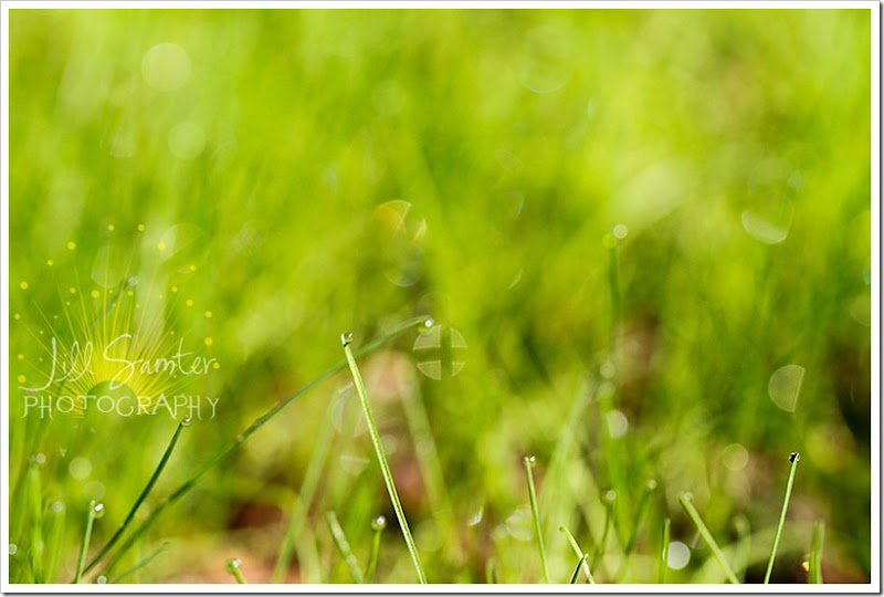 dewdrops-4728