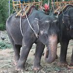 Tailand-Phuket (19).jpg