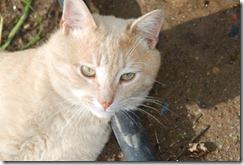 gato DSC_052110