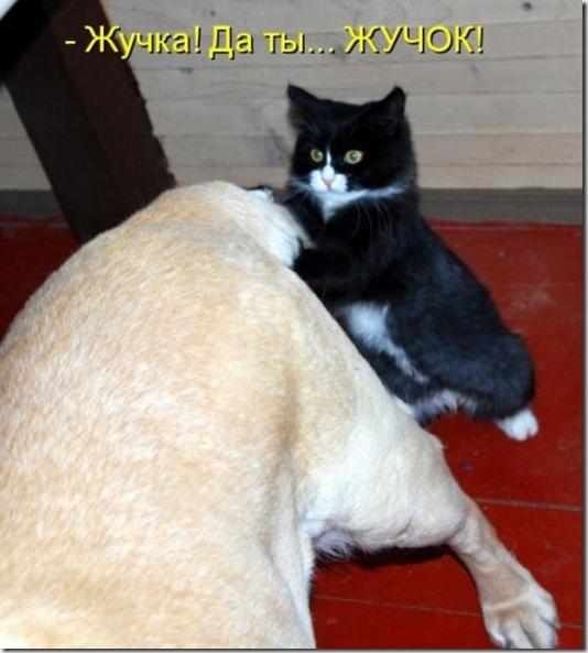 80718855_zhuchka_ili_zhuchok