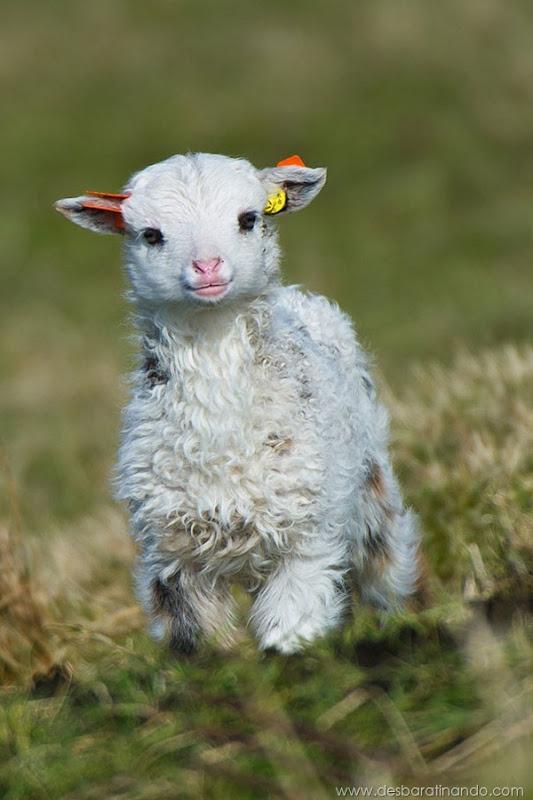 filhotes-de-animais-fotos-cute-cuti-desbaratinando (24)