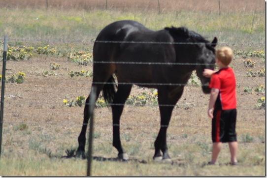 06-11-13 Zane and horses 10