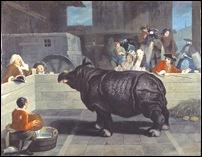 Pietro Longhi, Rhinoceros 1751