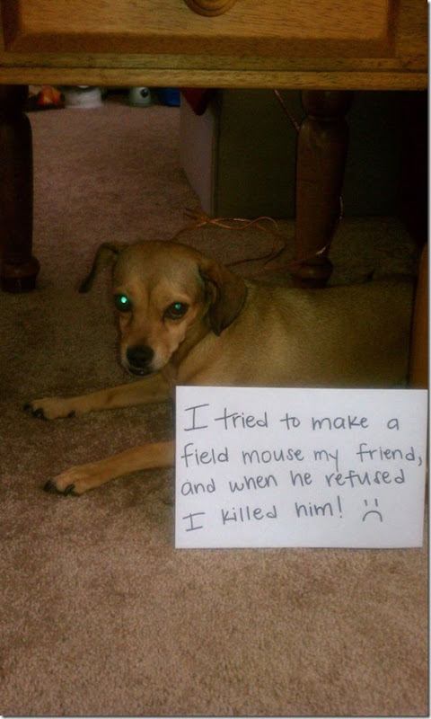 dog-shaming-bad-35