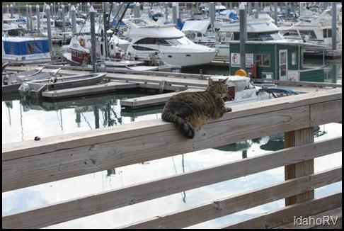 Valdez-Marina-Cat