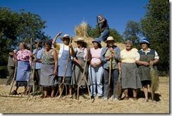 Portuguese harvest