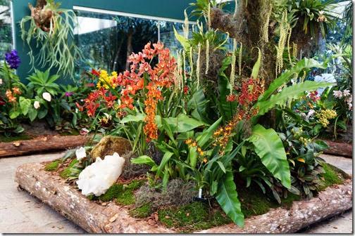 Festival de Orquídeas em Teresópolis 10
