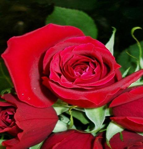 jardim-rosa-vermelha
