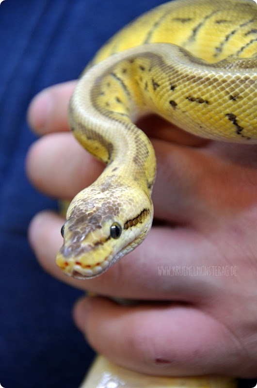 Python (06) von PB Snakes 311214