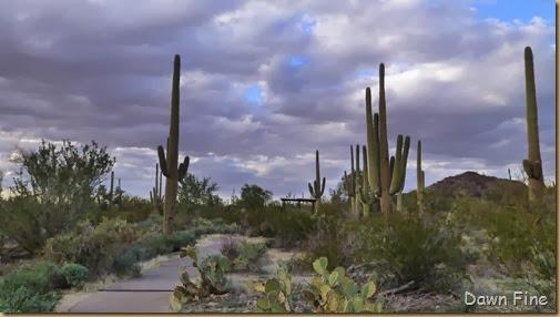 Saguaro NP West_024
