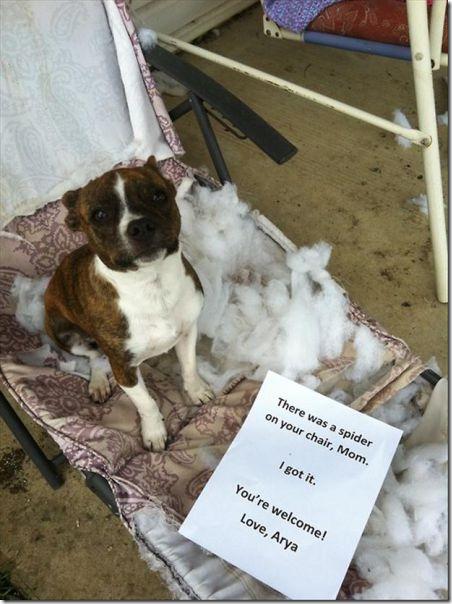 dog-shaming-bad-9
