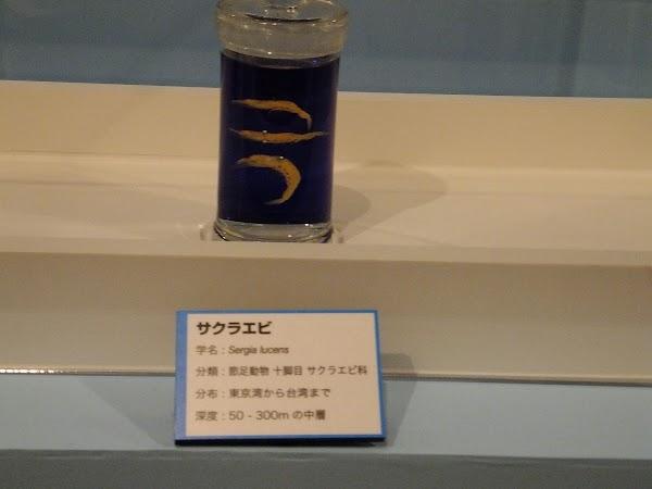 DSCF9548.JPG