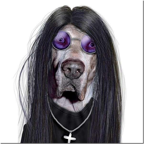 perros dsifrazados (8)