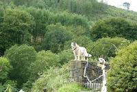 A dog, not a wolf!