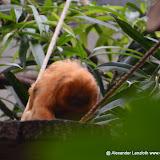 Heidelberger-Zoo_2012-04-09_809.JPG