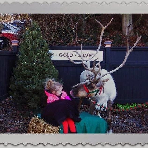 Nov/Dec 2013 - 1st Place / Jingles & Olive Reindeer / Credit: Brenda Rader