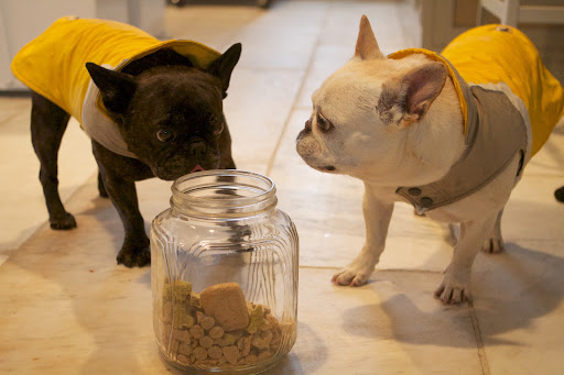 We're very grateful that treats are just a cute face and a cookie jar away.  Yum!!!