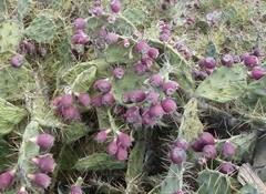 ten103 cactus