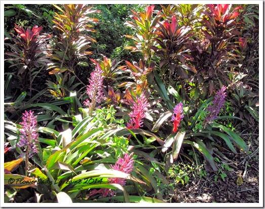 11-20-foliage