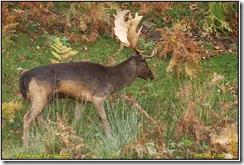 Bradgate Park D50  27-10-2012 13-09-06