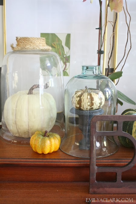 pumpkin-under-glass-cloche